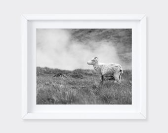 Iceland sheep print - Fine art farm photograph - Country photos - Iceland black and white photo - Hot springs steam art - Photography gift