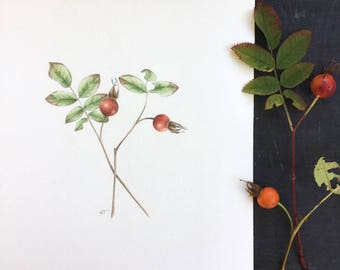 Two rose hips - original drawing