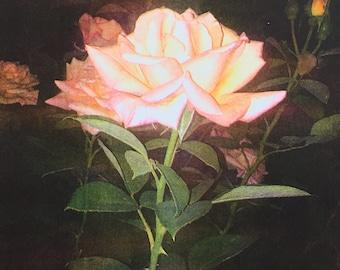 Night Rose Risograph Print