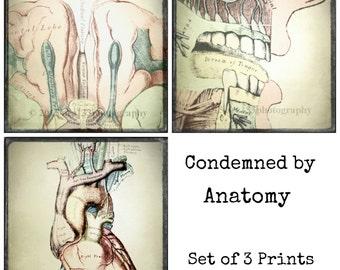 Anatomical Art, Medical Anatomy Prints, Set of three 5x5 inch Photo Prints, Oddity, Surreal Decor, Neutral, Heart, Brain, Mouth