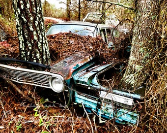 1962 Ford Falcon and Mercury Comet with Trees Photograph