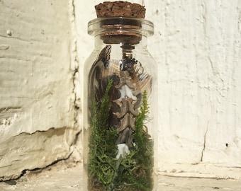 Curiosity Bottle | Snake Spine | Pheasant Feathers