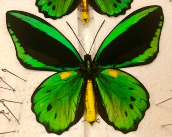 EXTRA LARGE Green Bird Wing