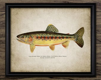 Golden Trout Wall Art - Trout Fishing - American Trout Print - Californian Golden Trout - Fly Fishing - Single Print #2540 -INSTANT DOWNLOAD