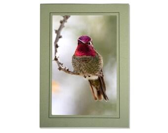 Hummingbird Photo Greeting Card - Bird Card Blank Inside - Blank Hummingbird Note Card - Pink Gold Bird Photo - Anna's Hummingbird Card