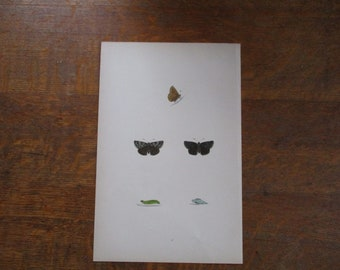 1870 Antique Hand Colored Print of Butterflies