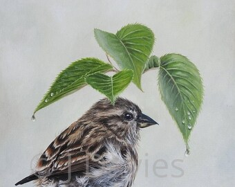 bird art print, Bird print, sparrow print, sparrow painting, british garden bird, house sparrow, tree sparrow, bird and leaves