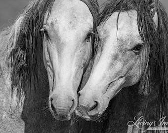 Wild Friends - Fine Art Wild Horse Photograph - Wild Horse - Sand Wash Basin - Fine Art Print