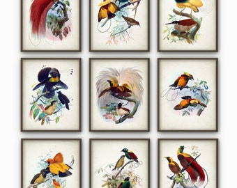 Birds of Paradise Antique Art Print Set of 9 - Vintage Home Decor Antique Book Plate Illustration Giclee Bird Picture Set of 9 (B197)