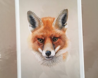 Signed Limited Edition Fox Mounted Print