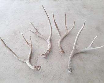 4 genuine natural real deer antlers decorative design decor crafts art centerpiece gift rustic antler wedding