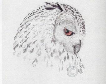 Cape Eagle Owl Bird Print