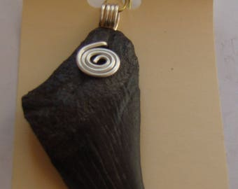 Fossil MEGALODON SHARK tooth made into pendant / necklace !!