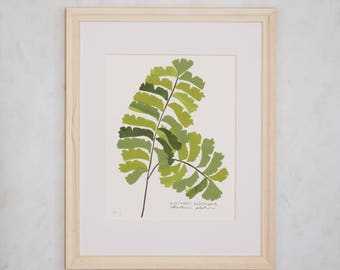 Art Print of Original Native Plant Collage- Northern Maidenhair Fern
