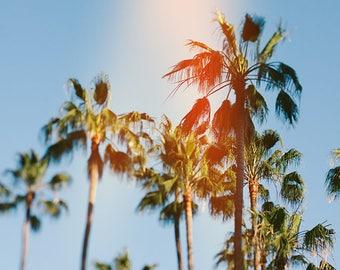 Palm Tree Photography, California Art, Palm Tree Print, California Print, Palm Tree Decor, Palm Tree Photo, Beach Art, Fine Art Photography