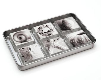 Magnets, Black and White Seashells, Set of 6, Glass, Nautical, Home Decor
