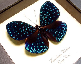 Dad's and Grad's Gift Real Framed Starry Night Van Gogh Blue Butterfly Costa Rica 681