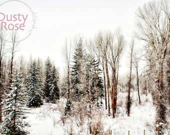 Snowy Forest on a Winter Morning