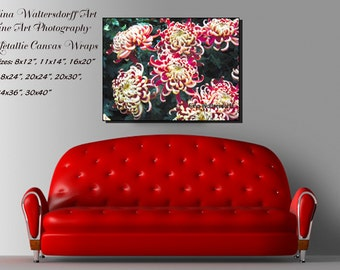 Red Ivory Chrysanthemums red flowers large flower pedals wall art home wall decor fine art photography Bucks County Made Gina Waltersdorff