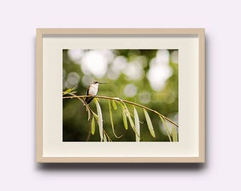 Hummingbird print, wall decor, hummingbird picture, hummingbird decor, hummingbird photography, bird decor, nursery decor, nursery wall art