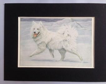 SIBERIAN REINDEER SAMOYED dog Louis Agassiz Fuertes Vintage Mounted 1919 plate print Congratulations Christmas Thanksgiving Birthday gift