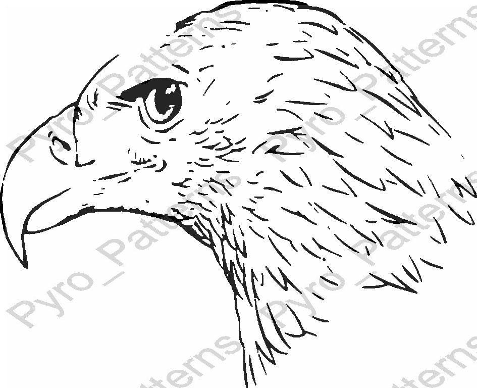 pyrography wood burning bald eagle head bird pattern printable rh etsy com Bald Eagle Body Parts Diagram bald eagle life cycle diagram