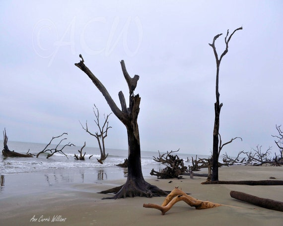 Bone Yard Beach on Bull Island South Carolina (PR) (canvas)