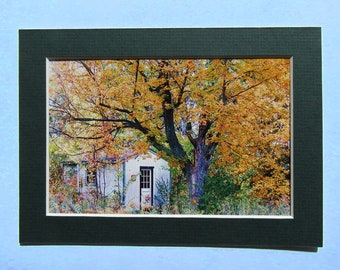 Matted 4x6 Autumn Fine Art Print Photography, Signed Artwork, Small Wall Art Home Decor Fall Foliage Whimsy