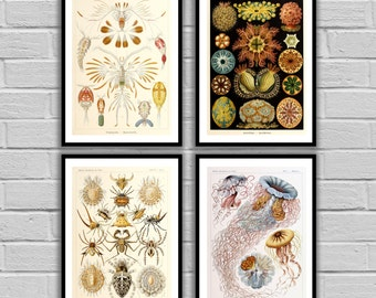 Vintage Ernst Haeckel Print - Vintage Set of 4 - Print or Canvas - Ernst Haeckel Art - Nautical art - Sea Life Prints - Set of 4 -2,3,4,7