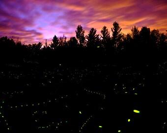 Fireflies #2