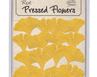 Real Pressed Yellow Ginkgo Leaves - 16 pieces