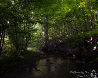 Forest and a Stream - Nature Photograph
