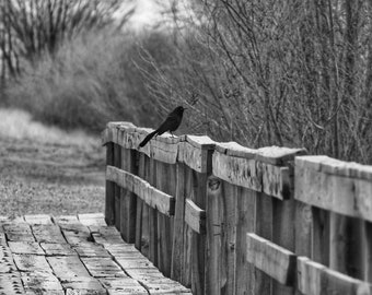 Ravens train bridge