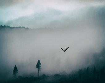 Eagle Photography | Romantic Fine Art Photography | Abstract Nature Print | Foggy | Trees | Pacific Northwest Landscape