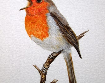 Original watercolour painting of a Robin by Josephine Bell