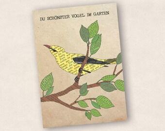 Postcard: Oriole