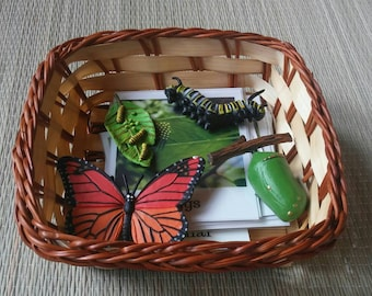 Life Cycle of a Monarch Butterfly, Montessori, Life Science