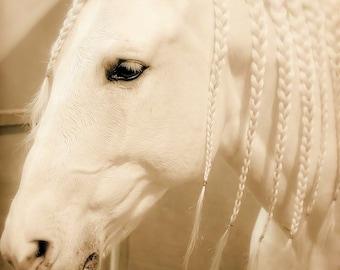 Horse Photograph - fine art print - 10x10 photograph - white horse portrait - braided - nursery room - fantasy - romantic - valentines day