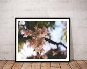 cherry blossom photograph...