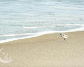 Nature and Bird Photography.  Beach, Sea, Ocean Photography. 8x12 Print