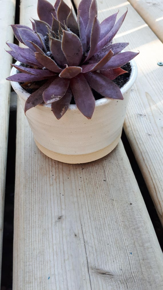 Pottery Planter simple modern white 3 inches tall 3 inches across perfect for succulents