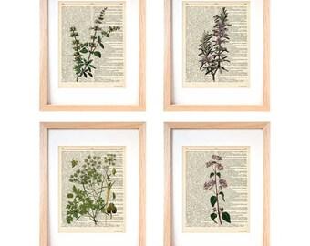 Kitchen herbs wall art set of 4-herbs dictionary prints-kichen wall art-botanical print-herbs spices wall art-home decor-NATURA PICTA-DP110