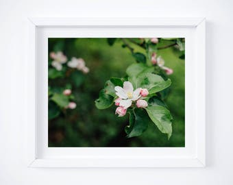 Spring Flowers Photo print, Blossom Picture, Green Wall Art, Floral Home Decor, Nature Print, Botanical Art, Girlfriend photo gift for mom