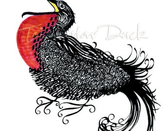 Magnificent Frigatebird, calligraphic, signed limited edition for bird lovers
