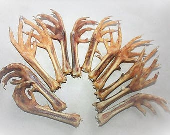 12 Decor - Talisman - Natural Chicken Foot Charm - Lucky Chicken Foot - Foot talisman - Protection Amulet - Spellcraft Chicken Foot Talisman
