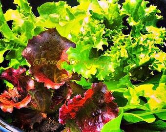 Salad Bowl Seeds