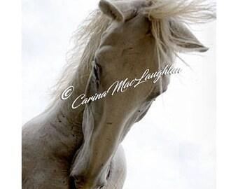 Creag / Rock /Rocher - Equine Fine Art Horse Photography - Cheval Etalon Photographie d'Art