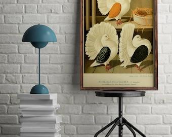 Pigeons Antique Print| Pigeon Art| Vintage Pigeon Print| Pigeon Wall Art| Natural Art| Affiche Oiseau| Birds Wall Art Print| HAP030