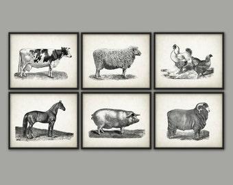 Farm Animals Wall Art Print Set Of 6 - Vintage Animal Breeds Book Plate Illustration - Cow - Horse - Sheep - Pig - Chicken - Ranch Livestock