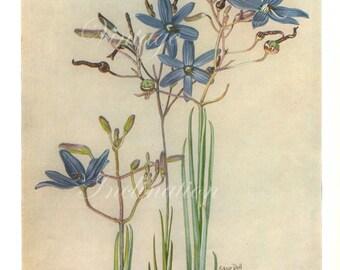 Vintage Botanical Print Antique Grass Lily Flowers, purple plant print botanical lithograph print bookplate wall art flower plants
